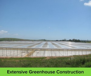 Extensive-Greenhouse-construction